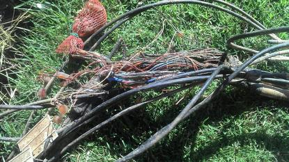 The justifications to implement Fibre to the Node in Australia defy reality. Source: MAGILLA (CANOFWORMS.ORG)