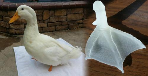Buttercup, a duck born with a deformed foot, will be getting a new, 3D-printed prosthetic foot designed in Autodesk 3D by her owner, Mike.