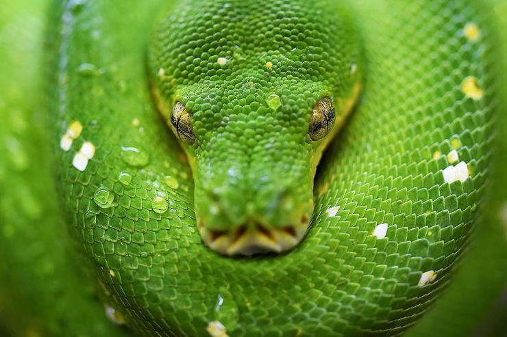 Snake bites: Beware malicious Python libraries