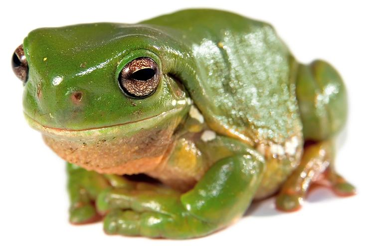 Green Tree Frog ex-owner says an Australian Communications and Media Authority remedial direction is a waste of time