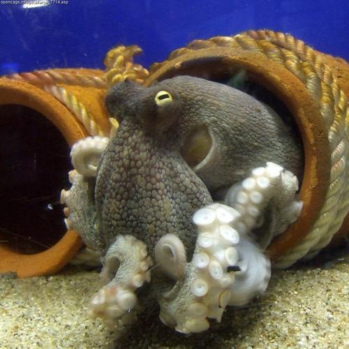 An octopus, yesterday.